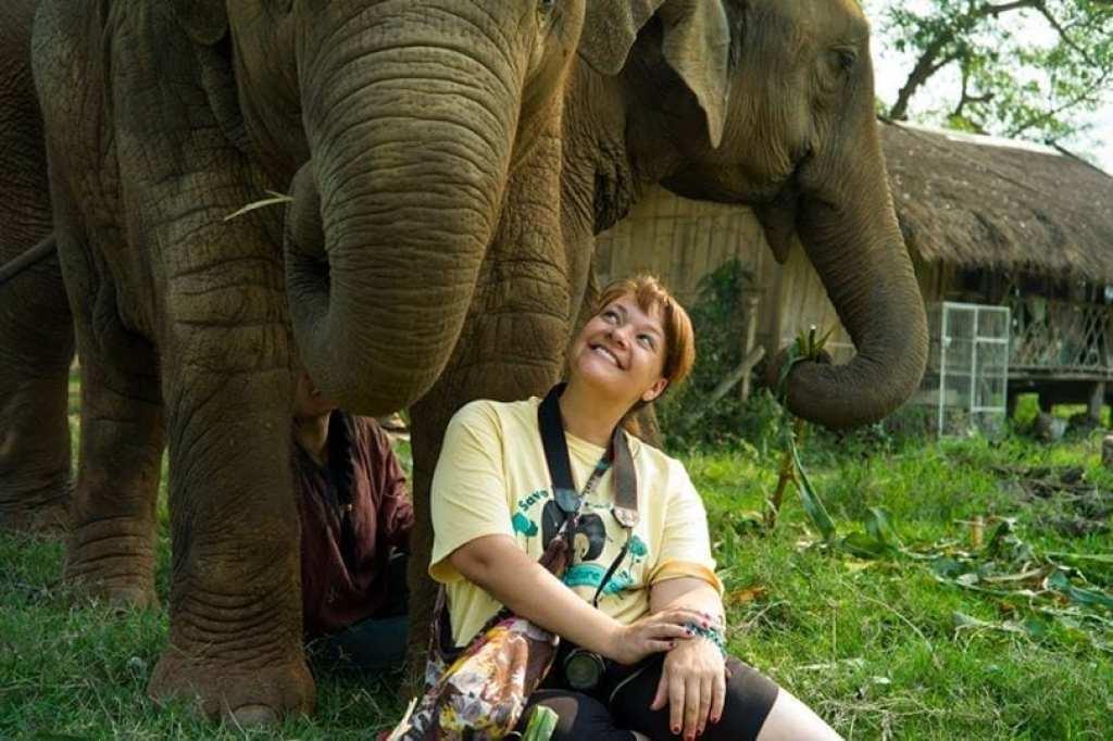 Elephant rescue Thailand