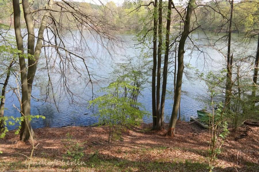 Seegrundstück in der Schorfheide: Blick über den See