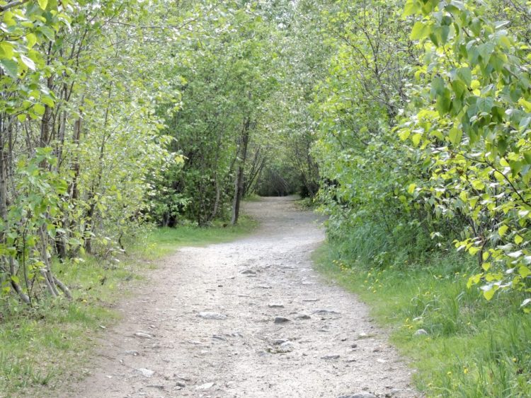 Yakutania Point trail