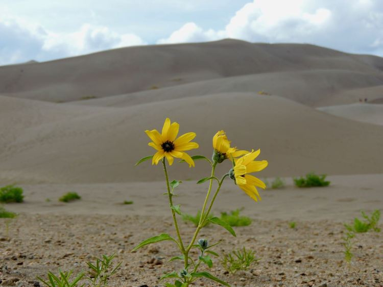 Flowers growing in the dunefield