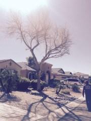 Dead Tree Removal