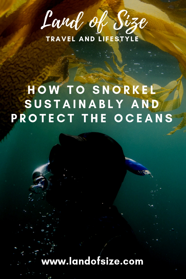 How to respect the reef: Safe sunscreen for snorkelling and other tips