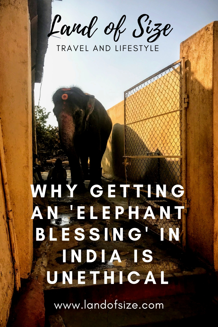 Why getting an 'elephant blessing' in India is unethical