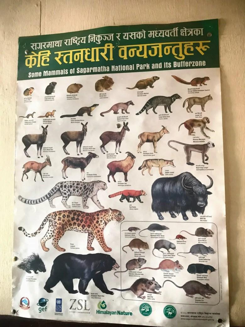 Wildlife of Sagarmatha National Park, Nepal
