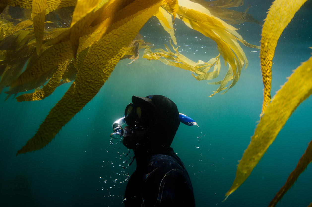 A diver surfaces in a beautiful ocean underwater