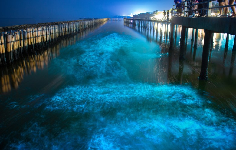 Bioluminescence in the ocean, iStock