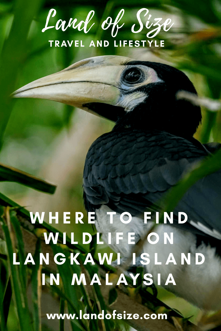 Where to find wildlife on Langkawi Island in Malaysia