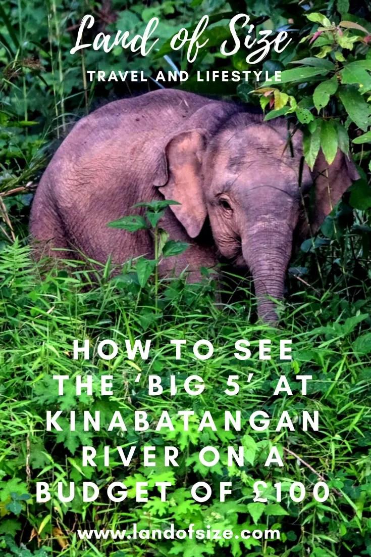 How to see the 'Big 5' at Kinabatangan River on a budget of £100