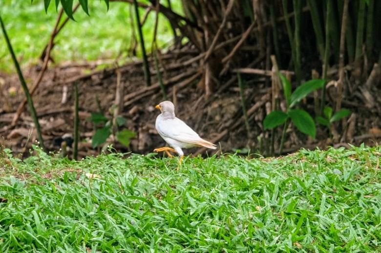 Starling, Kuala Lumpur, Malaysia
