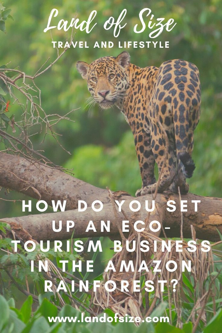 How do you set up an eco-tourism business in the Amazon rainforest?