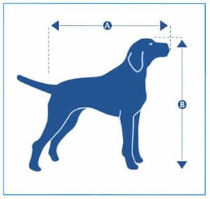 A picture showing the measurements of a dog