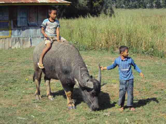 Knaben und Wasserbüffel