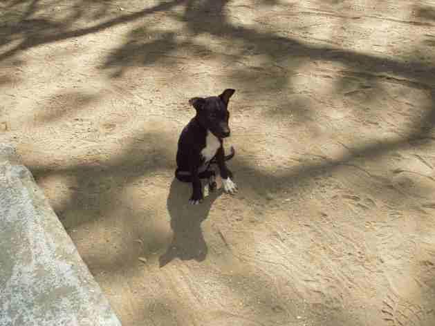 Ein kleiner Hund begleitet mich