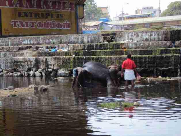 Elefant beim Waschen
