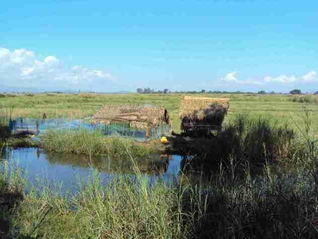 Hütten im Sumpf