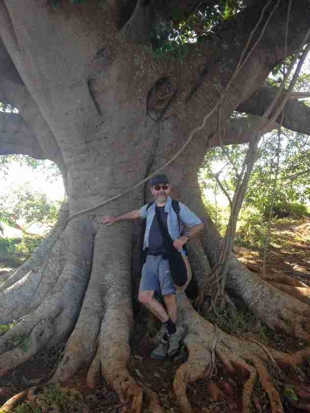Im Schatten des Banyan Baumes