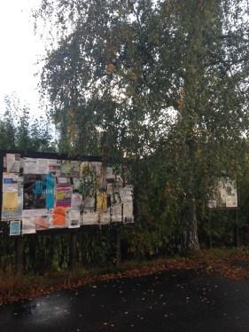 Hjorted - Björken skymmer anslagstavlan och flera tyckte att trädet skulle tas ner.