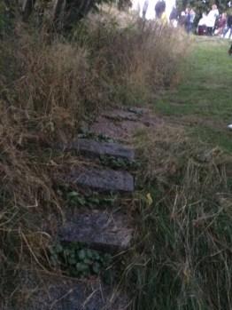 En trapp ner mot parken döljs av gräs.