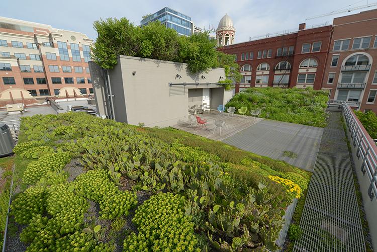 Rainwater Landscape Architecture Magazine