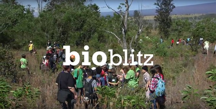 Citizen scientists and experts work to catalogue and identify as many species as possible during the BioBlitz event.