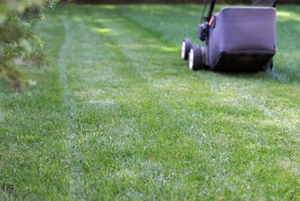 How to Cultivate and Maintain a Great Lawn