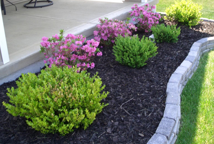 Best Types Of Shrubs For Landscaping Designs Photos