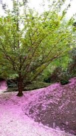 UNESCO peace garden