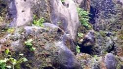 Rock Garden 06