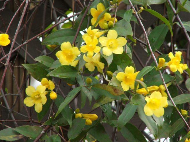 Northern Virginia Native Plants, Fascinating Northern Virginia Native Plants, Landscape Pros | Landscape Design & Landscaping Services Manassas, VA