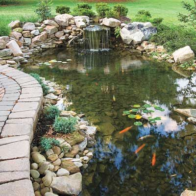 semi-natural garden pond