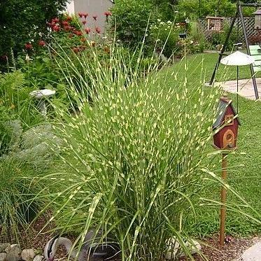 Landscaping Tips for Ornamental Grasses, Landscaping Tips for Ornamental Grasses, Landscape Pros | Landscape Design & Landscaping Services Manassas, VA