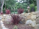 Phormium 'Guardsman' - Guardsman New Zealand Flax - and Max
