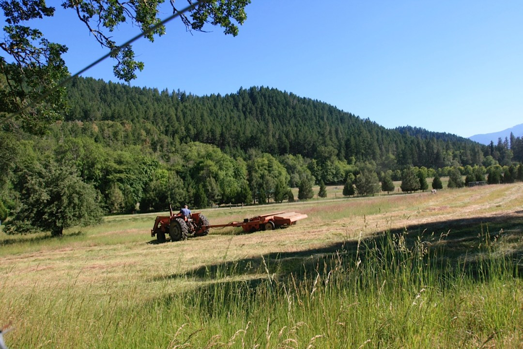 Restoration Agriculture: Restored weed free meadow