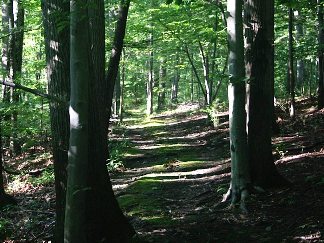 ForestRambleH