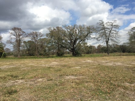 desolate New Orleans City Park