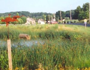 lititz-run-watershed-created-wetland