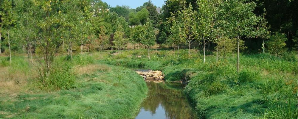TPC Potomac at Avenel Farm Afforestation & Floodplain Restoration