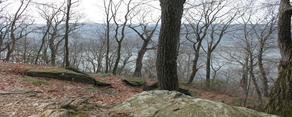 Gutshall Appointed to Conservancy Land Protection Committee