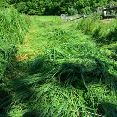 das Gras liegt flach
