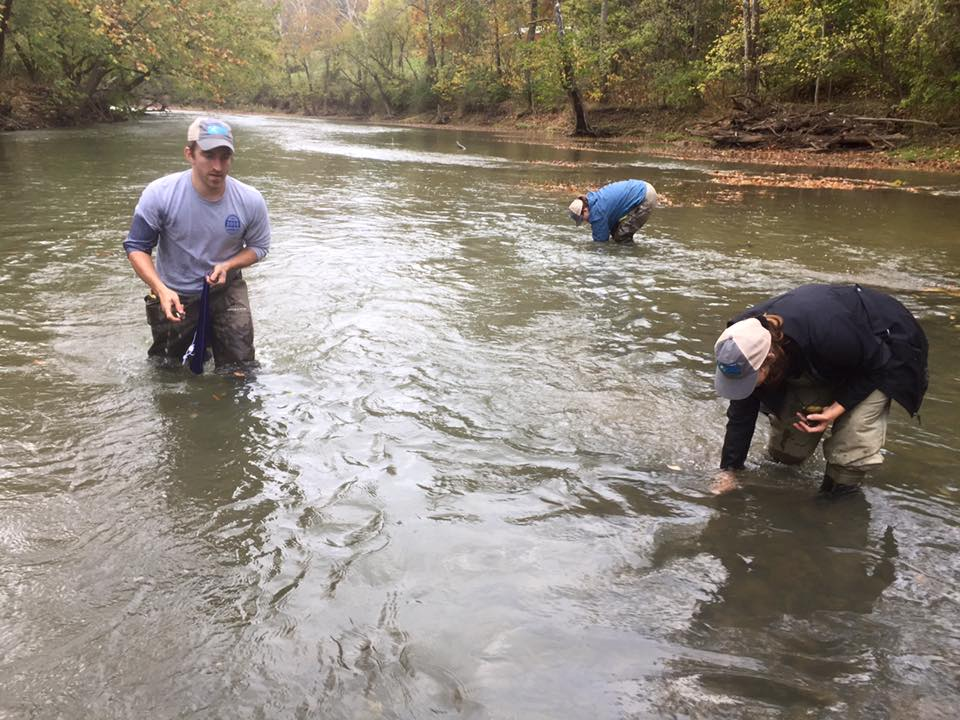 Placing salvaged mussels in safe habitat upstream from dam removal. (photo credit: Nick Millett)