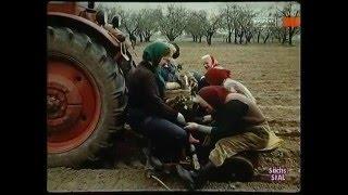 Ernteschlachten in der DDR