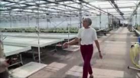 wie-koennen-pflanzen-fast-ohne-wasser-gedeihen-future-arte