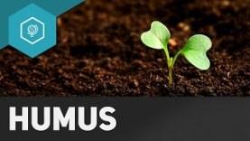 humus-und-humifzierung-boeden-basics-3