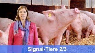 schweine-signale-signaltiere-pigwatch-tutorial-2-3