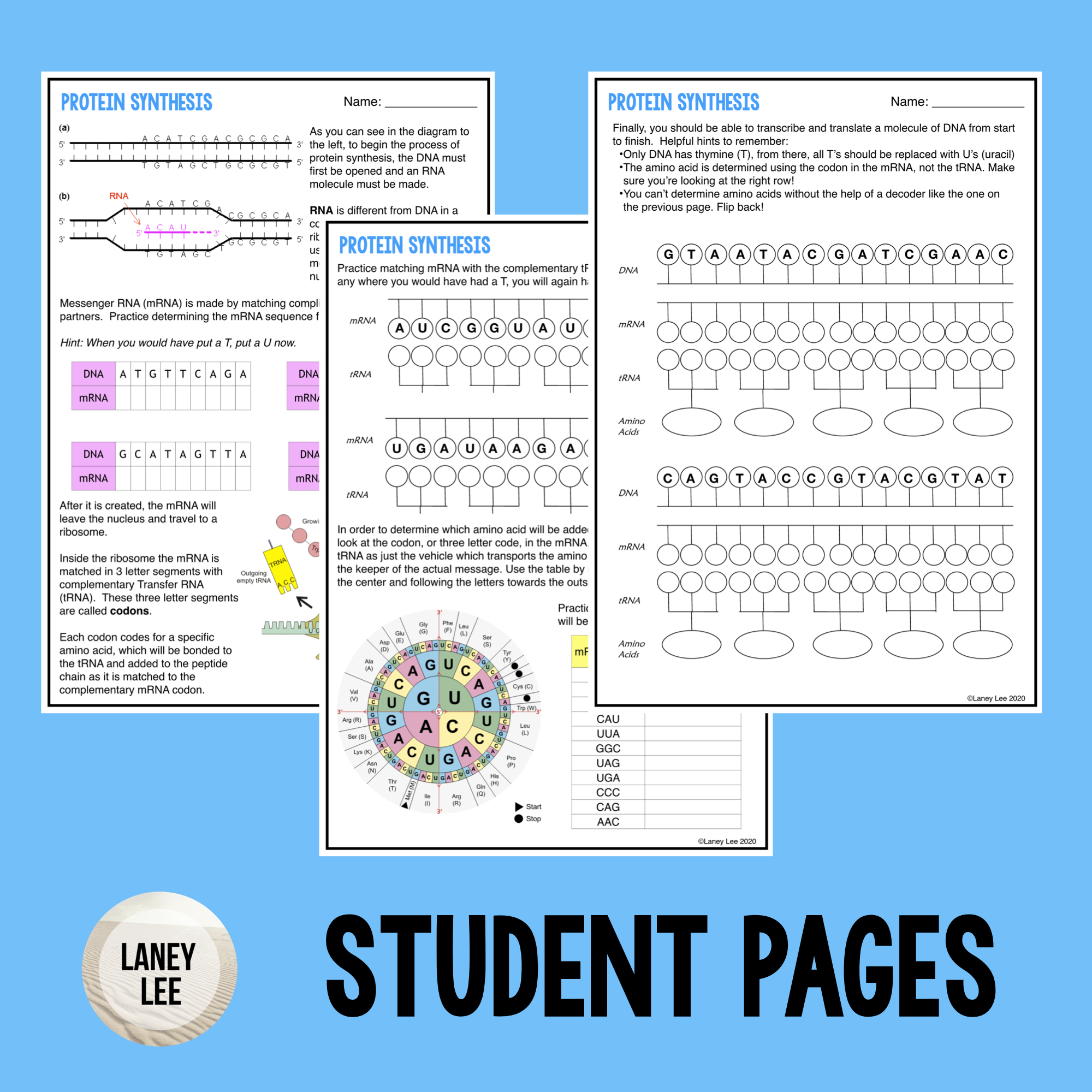 Protein Synthesis Guided Practice Worksheet