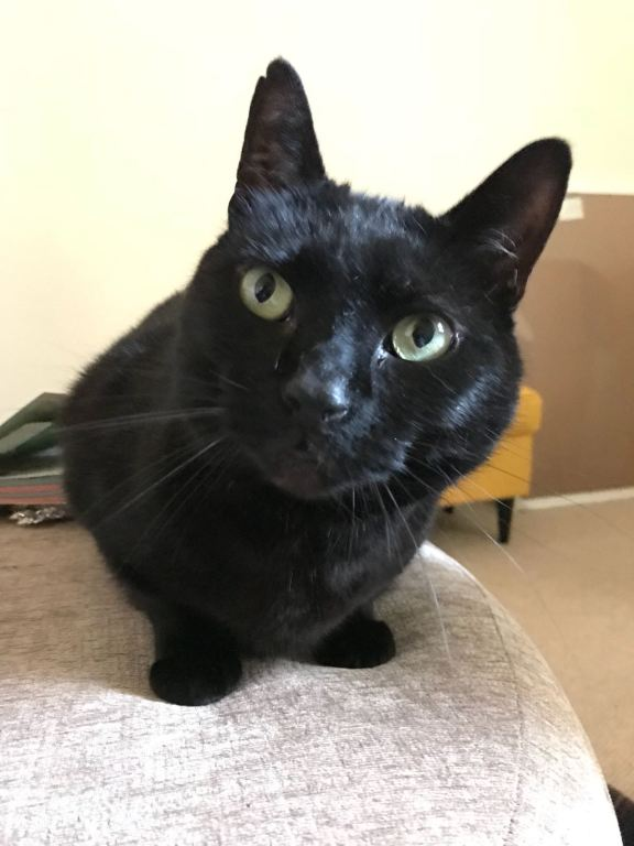 Walter the black cat