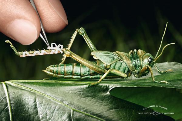 a-lange-soehne-watches-grasshopper-small-60012