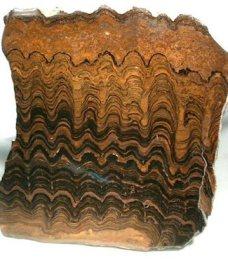 Fosil stromatolit dari Bolivia.