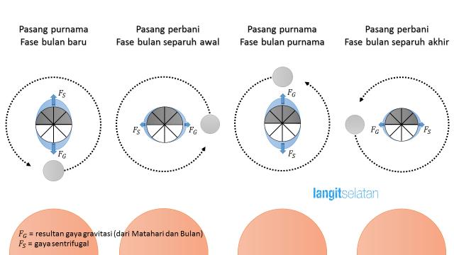 Ilustrasi terjadinya pasang purnama dan pasang perbani yang terjadi dalam satu siklus Bulan. Kredit: Edward Taufiqurrahman / langitselatan