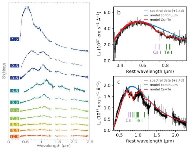 Spektrum kilonova AT 2017gfo yang tampak sangat biru dan dalam 12 hari berubah menjadi sangat merah, serta identifikasi profil absorpsi dengan cesium dan telurium. Kredit: S. J. Smartt et.al